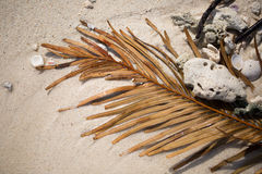 Palm leaf and shells on the sand Royalty Free Stock Image