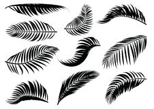 Free Palm Leaf Silhouette. Royalty Free Stock Photo - 99198145