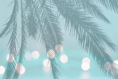 Palm leaf silhouette on festive blurry lights on soft teal turquoise. Vintage green background with copy space royalty free stock images
