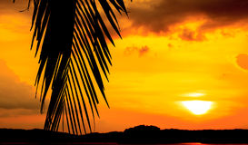 Palm Leaf Silhouetted Against Sky At Sunset Stock Images