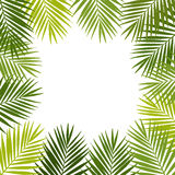 Palm leaf silhouettes frame. Tropical leaves. Royalty Free Stock Images