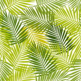 Palm leaf silhouettes seamless pattern. Tropical leaves. Royalty Free Stock Images