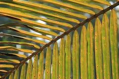 Palm Leaf in sun light Stock Image
