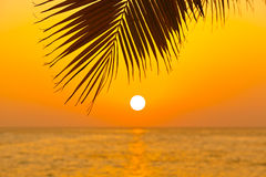 Palm leaf and sunset Royalty Free Stock Photo