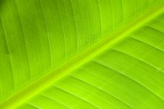 Palm leaf surface Royalty Free Stock Images