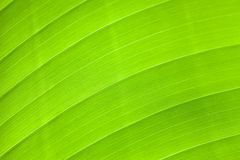 Palm leaf surface Stock Images