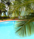 Palm leaf and swimming pool Royalty Free Stock Photos