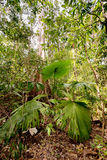 Palm leaf in Tangkoko National Park Royalty Free Stock Photos