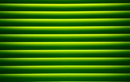 Palm leaf texture. Abstract background Royalty Free Stock Photography