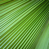 Palm leaf texture background Royalty Free Stock Photos