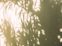 Palm leaf tree shadow on white wall background Stock Photography