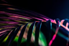 Palm leaf with trendy color filter,. Isolated on black royalty free stock photo