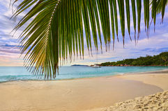 Palm leaf and tropical beach Royalty Free Stock Images