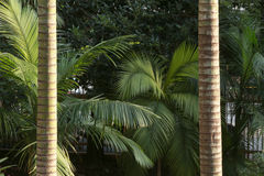 Palm leaf and trunk Royalty Free Stock Images