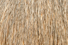 Palm leaf umbrella texture close up for background. Royalty Free Stock Photography