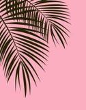Palm Leaf Vector Background Illustration Royalty Free Stock Images