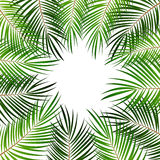 Palm Leaf Vector Background Illustration Royalty Free Stock Photography