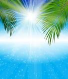 Palm Leaf Vector Background Illustration Royalty Free Stock Image