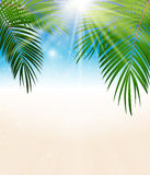 Palm Leaf Vector Background Illustration Stock Photography
