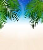 Palm Leaf Vector Background Illustration Stock Image