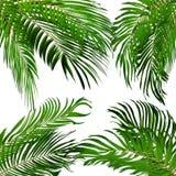 Palm Leaf Vector Background Illustration Stock Photos