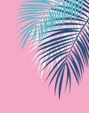 Palm Leaf Vector Background Illustration Royalty Free Stock Photo