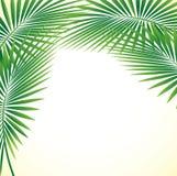 Palm Leaf Vector Background Illustration EPS10. Palm Leaf Stock Vector Background Illustration EPS10 Stock Images