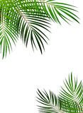 Palm Leaf Vector Background Illustration Stock Photos