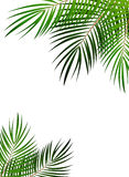 Palm Leaf Vector Background Illustration Royalty Free Stock Images