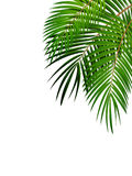 Palm Leaf Vector Background Illustration Stock Photo