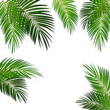 Palm Leaf Vector Background Illustration Stock Images