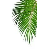 Palm Leaf Vector Background Illustration vector illustration