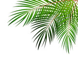 Palm Leaf Vector Background Illustration Royalty Free Stock Photo