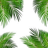 Palm Leaf Vector Background Illustration Stock Image