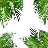 Palm Leaf Vector Background Illustration. Palm Leaf Vector Background Isolated Illustration EPS10 vector illustration