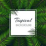 Palm Leaf Vector Background  with White Frame Illustration Royalty Free Stock Photo