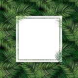 Palm Leaf Vector Background  with White Frame Illustration Royalty Free Stock Images