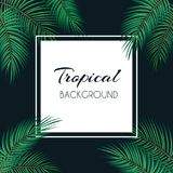 Palm Leaf Vector Background  with White Frame Illustration Stock Images