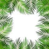 Palm Leaf Vector Background  with White Frame Illustration Stock Image