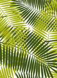 Palm Leaf Vector Frame Background Illustration Stock Image