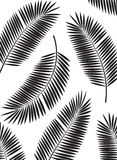 Palm Leaf Vector Frame Background Illustration Stock Photography