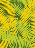 Palm Leaf Vector Frame Background Illustration Royalty Free Stock Photo