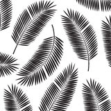 Palm Leaf Vector Frame Background Illustration Stock Photos