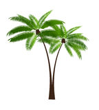 Palm Leaf Vector Illustration Stock Image