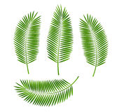 Palm Leaf Vector Illustration Royalty Free Stock Photos