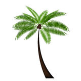 Palm Leaf Vector Illustration Royalty Free Stock Image