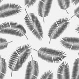 Palm Leaf Vector Seamless Pattern Background Stock Photos