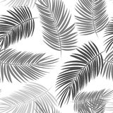 Palm Leaf Vector Seamless Pattern Background Illustration Stock Photos