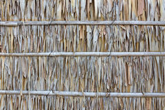 Palm leaf wall texture Royalty Free Stock Photo