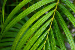 Palm leaf with water drops Stock Photos